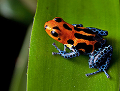 Animal toxins: exploring novel bioactive compounds from toads, snakes and scorpions